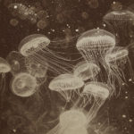 Underwater Collection by Alex Turco